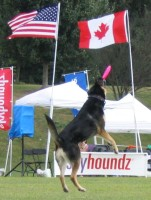 Highlight for Album: 2005 Hyperflite Skyhoundz World Canine Disc Championship