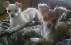 Chimi and Lia