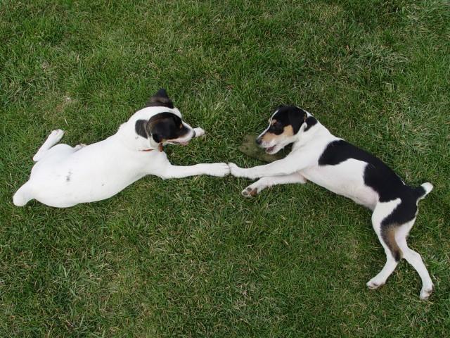 Macy and Roscoe
